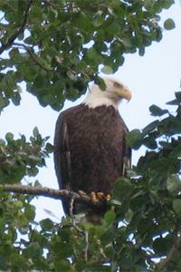 EagleTree4