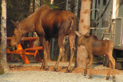 Moose_Campground_sm