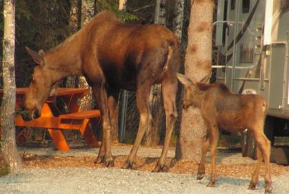 Moose_Campground_sm